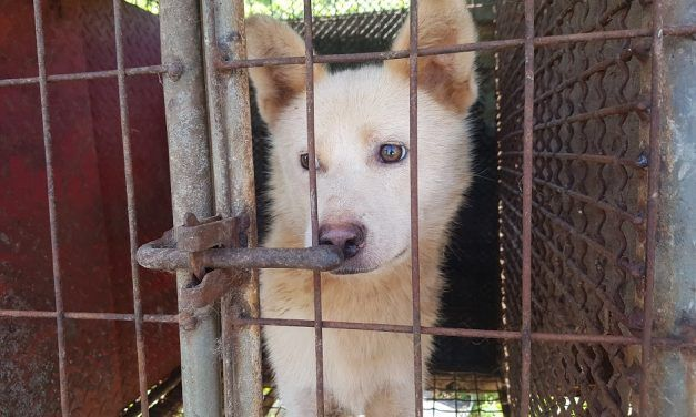 SIGN: Shut Down Illegal Dog Meat Farms in Gimpo, South Korea