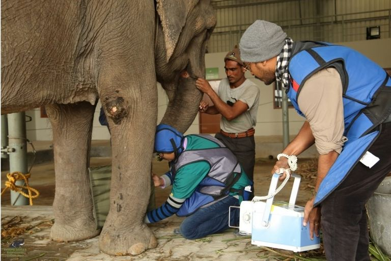 Medical staff at Wildlife SOS Elephant Hospital tend to Holly the Elephant. This is the first hospital of its kind in India.