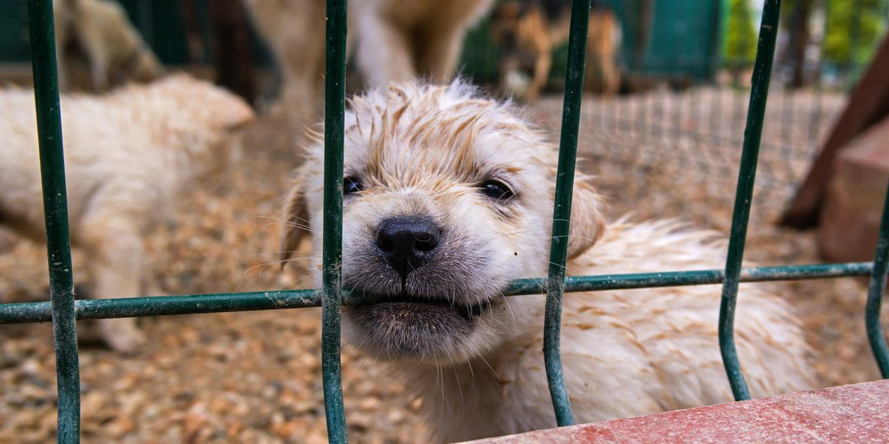 Sign: Shut Down This Puppy Mill of Horrors