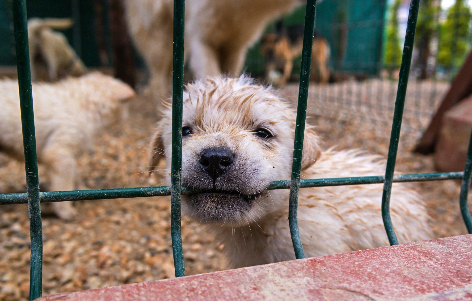 Representative image of puppy mill