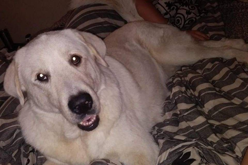 Brave Dog Dies Protecting Family During Shooting