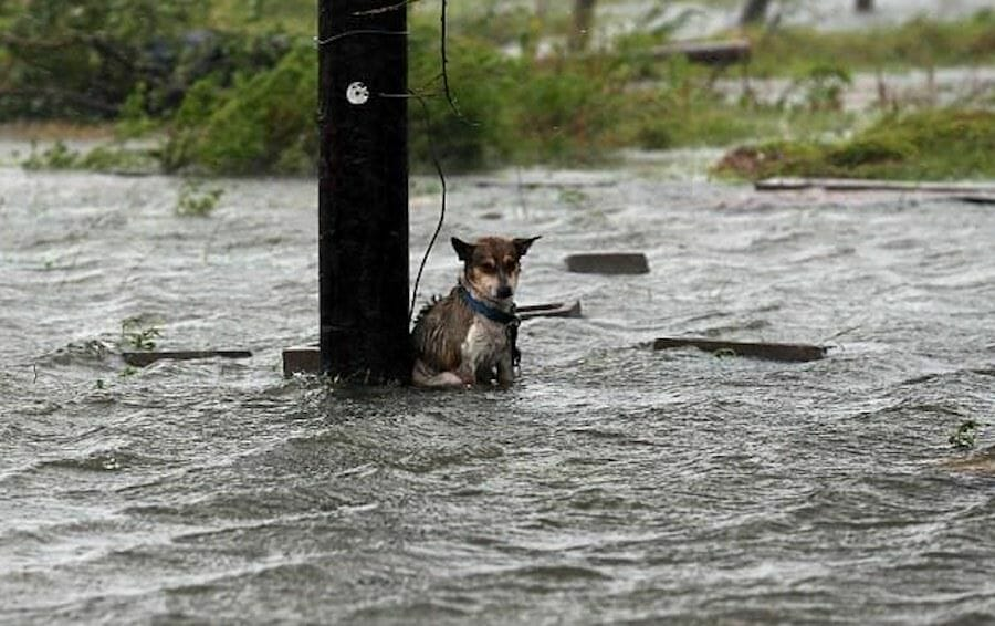 SIGN: Outlaw Leaving Dogs Chained Up to Die in Hurricanes