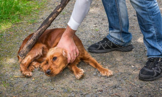SIGN: Pass Stronger Laws to Stop Animal Torture in Iowa