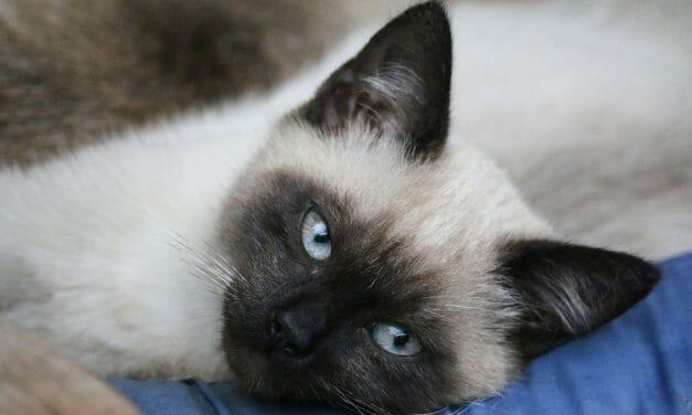 SIGN: Stop Serial Shooter Hunting Defenseless Cats