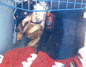 dog found dead in crate
