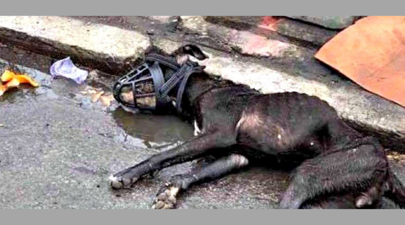 SIGN: Justice for Watson, Dog Found Muzzled and Dumped in a Puddle to Die
