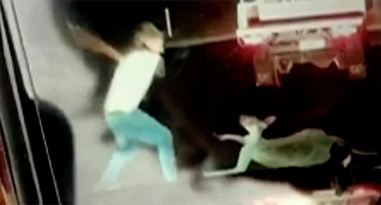 A teen brutally beats a kangaroo