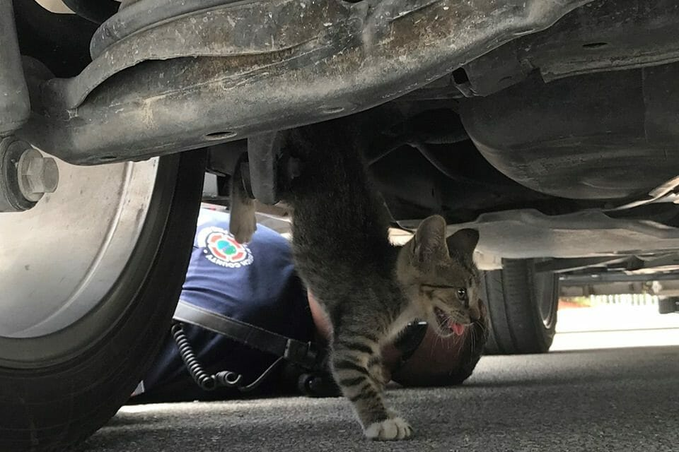 Hero Firefighters Save Kitten Stuck Under SUV