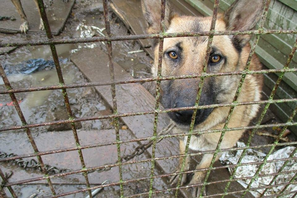 Only One In A Thousand Animal Cruelty Reports Ever Leads to A Conviction in Ireland