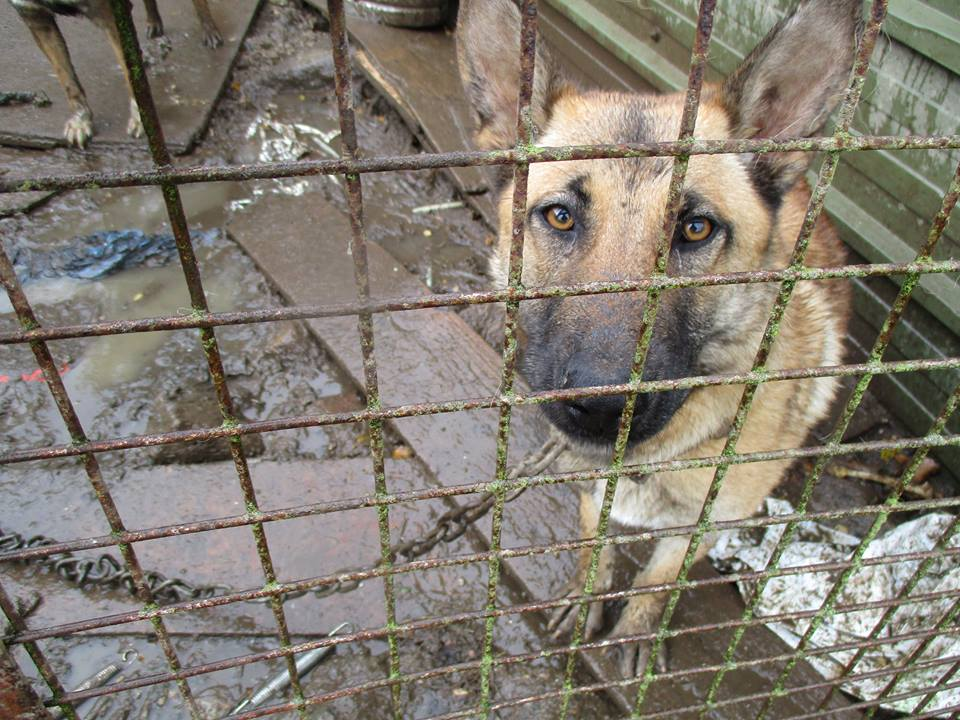 Dog trapped in muddy cage