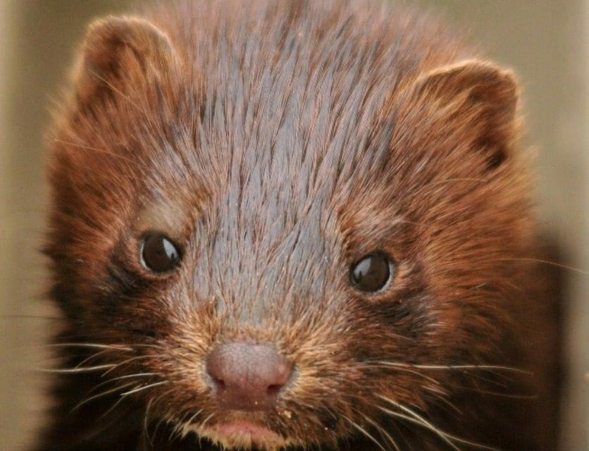 Prada Announces It Is Going Fur-Free!
