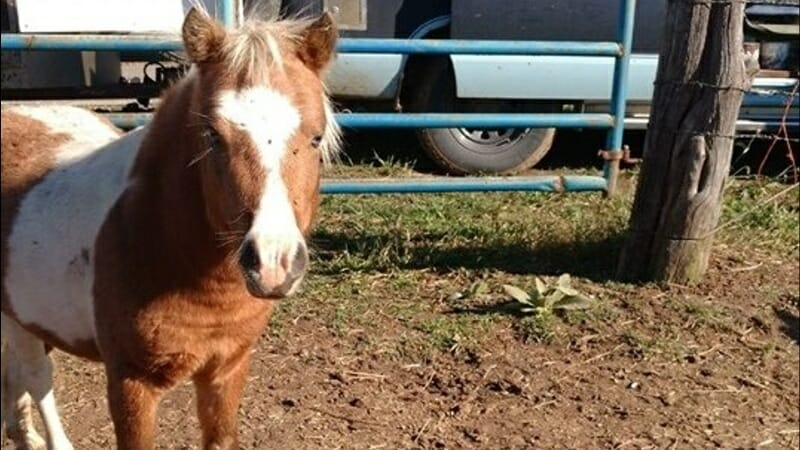 SIGN: Justice for Miniature Horse Found Shot and Dismembered