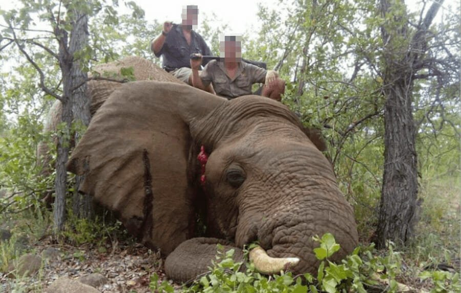 SIGN: Save Botswana's Elephants from Cruel Trophy Hunters