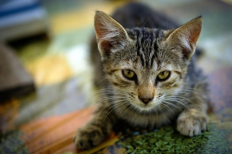 Study: Just 2 Percent of Animal Cruelty Cases in NZ Ever Make It to Court