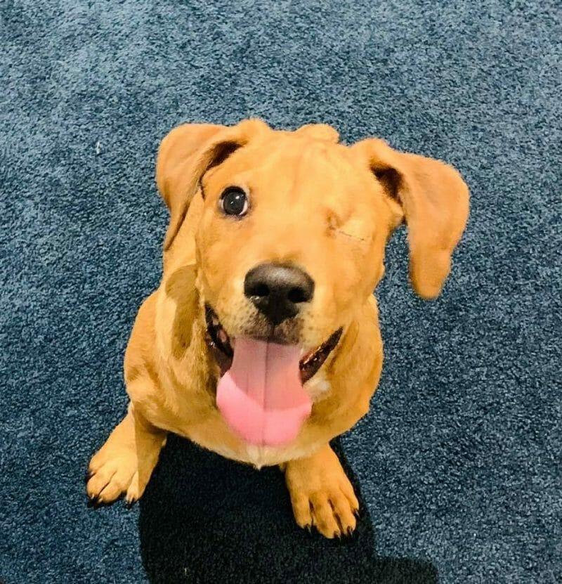Lovely one-eyed dog Trooper