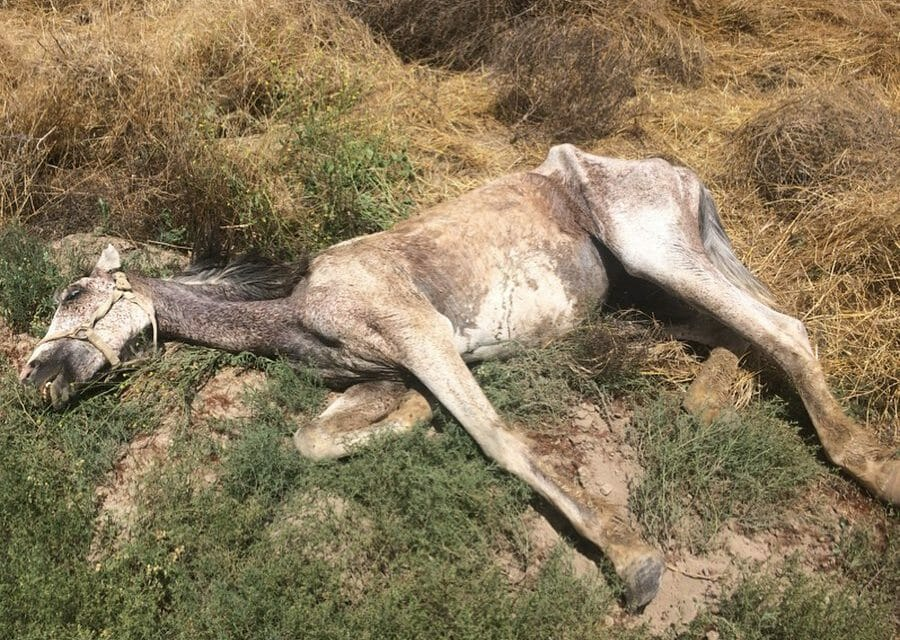 SIGN: Justice for Horse Starved and Left to Die in Field