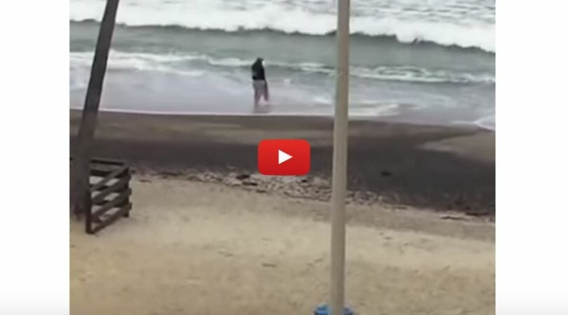 baby shark rescue