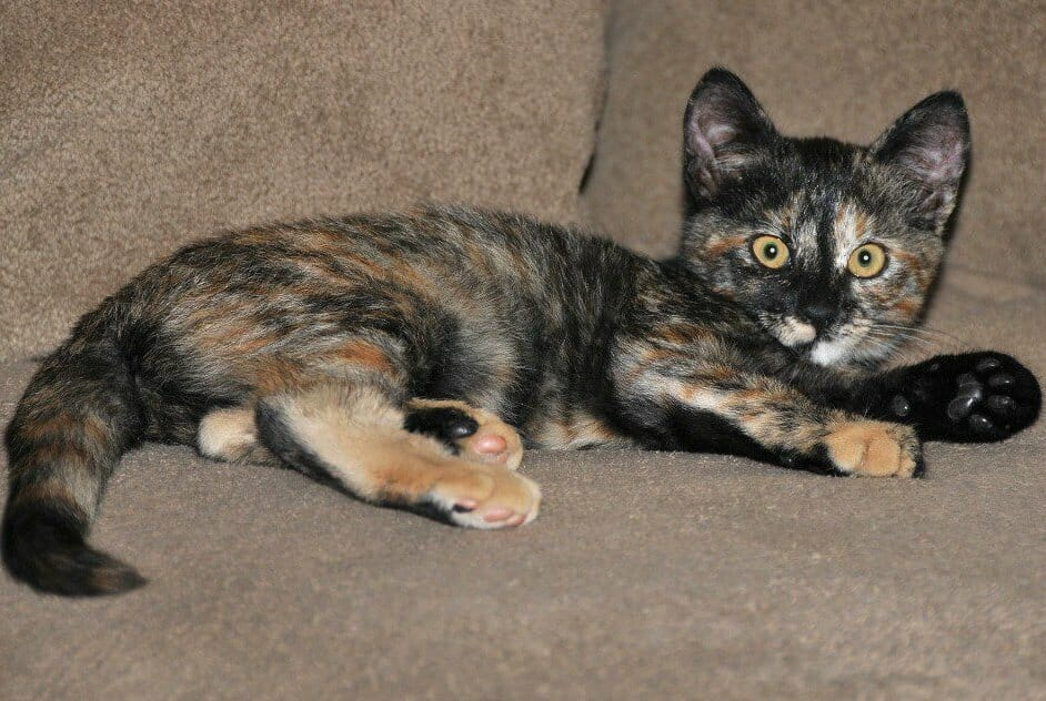 Sign: Justice for Tiny Cat Unable to Walk After Sexual Abuse