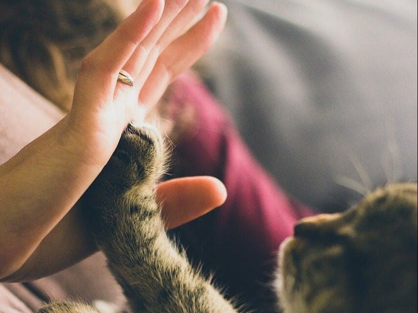 Cat Declawing Is About to Be Banned in New York State