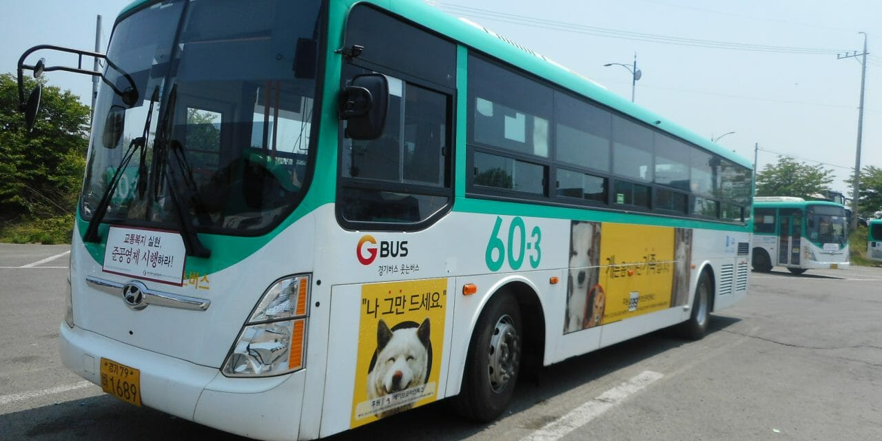 LFT Extends Bus Ad Sponsorship to End Dog Meat in S. Korea