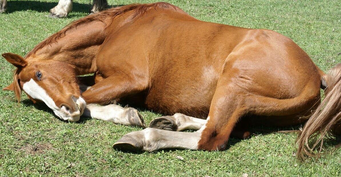 Another Horse Killed at Santa Anita Takes Death Toll to 30