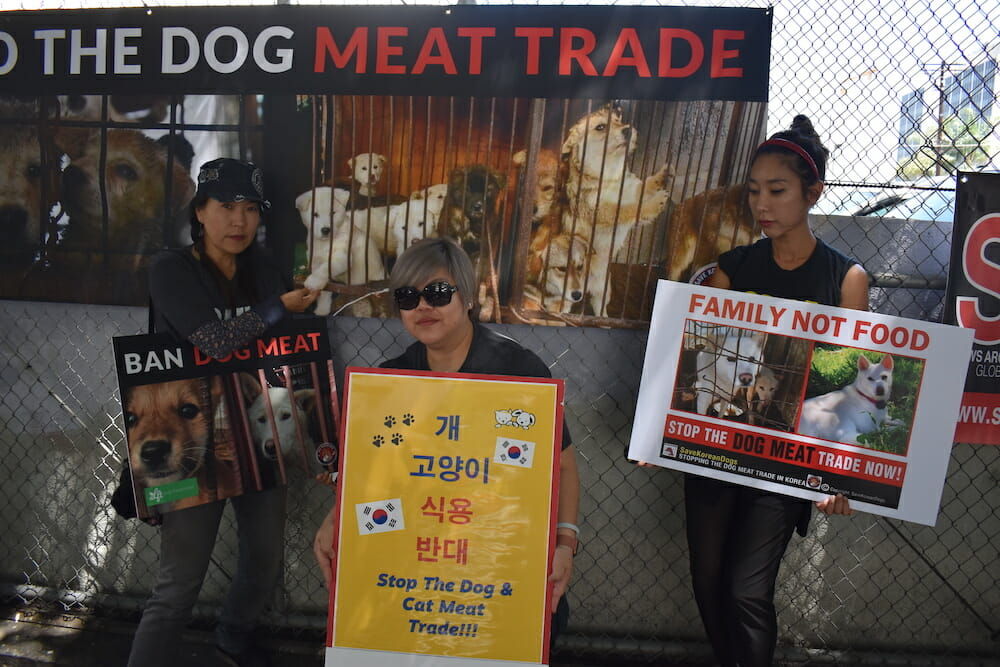 Animal rights protesters hold up signs at the Korean consulate in Los Angeles regarding the Korean dog meat trade.