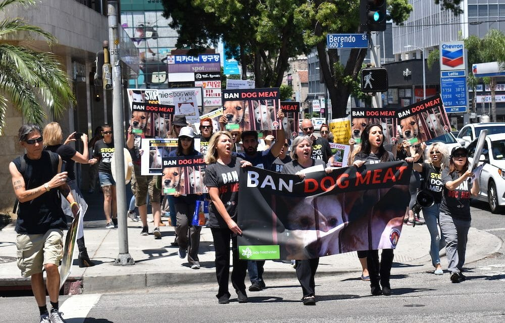 LFT Protests the Brutal Dog Meat Trade at the Korean Consulate in Los Angeles