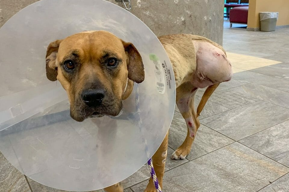 SIGN: Justice for Dog Starved and Ripped to Shreds as 'Bait'