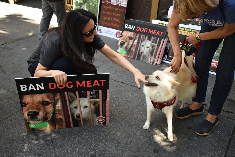 Lady Freethinker founder Nina Jackel and dog Yuki at a protest in LA against the Korean dog meat trade. Get involved at LFT!