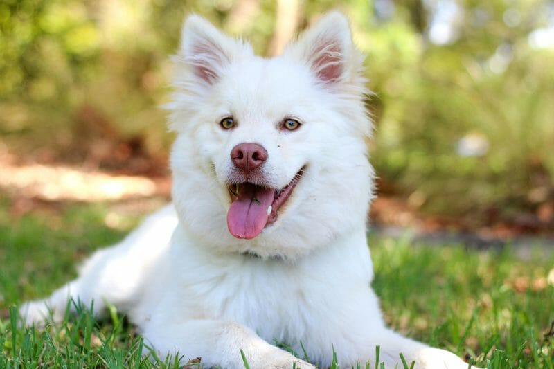 UPDATE: LA Council Unanimously Passes Resolution to End Dog Meat!