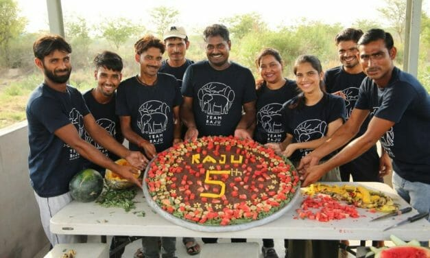 Raju the Elephant Gets A Special Cake To Celebrate His Rescue Anniversary
