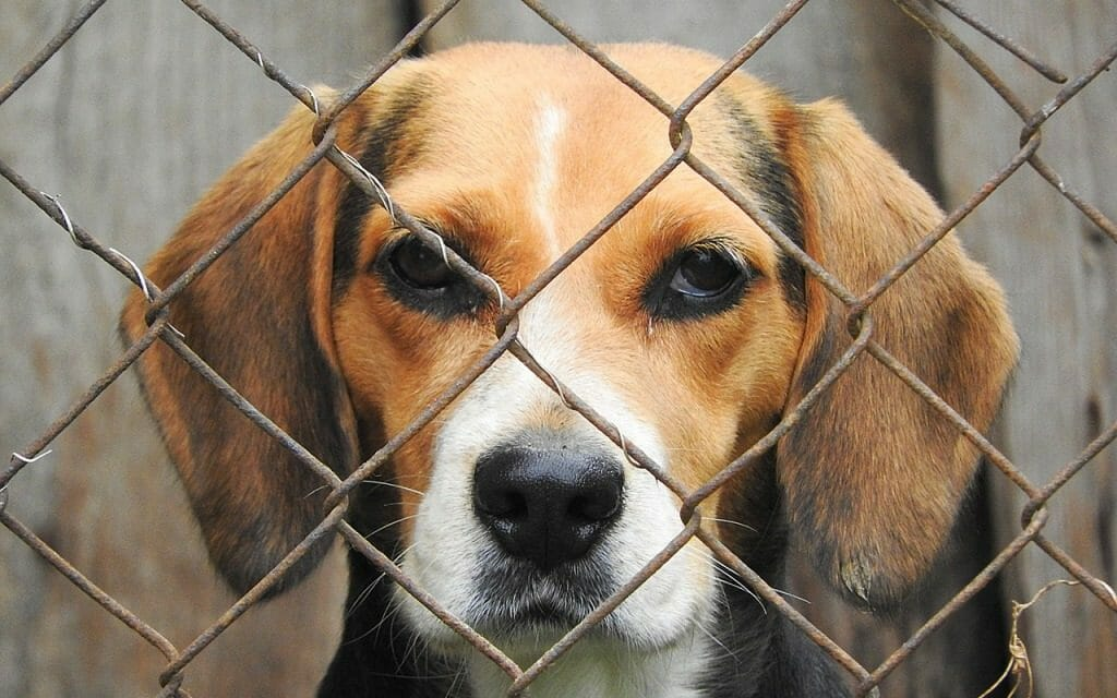 Sign: Stop the US Government from Forcing Cruel Drug Tests on Dogs