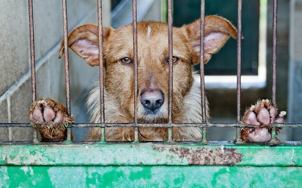 This Could Become the First Chinese City to Ban Dog and Cat Meat