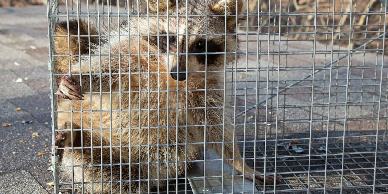 SIGN: Justice for Raccoon Trapped in Cage and Set on Fire