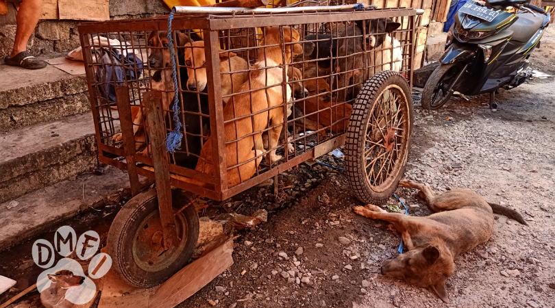 Activists Present 250,000 Signatures to End Dog and Cat Meat in North Sulawesi, Indonesia