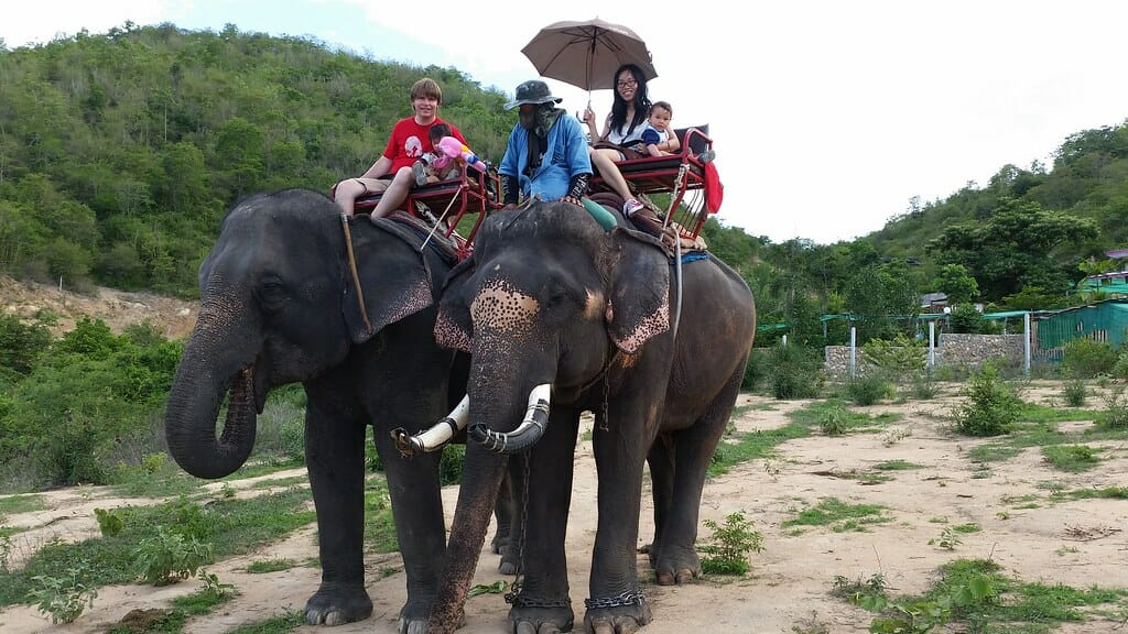 Victory for Elephants! This Indian District Has Just Stopped Cruel, Illegal Elephant Rides