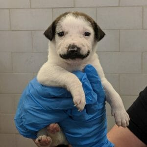 Puppy with moustache