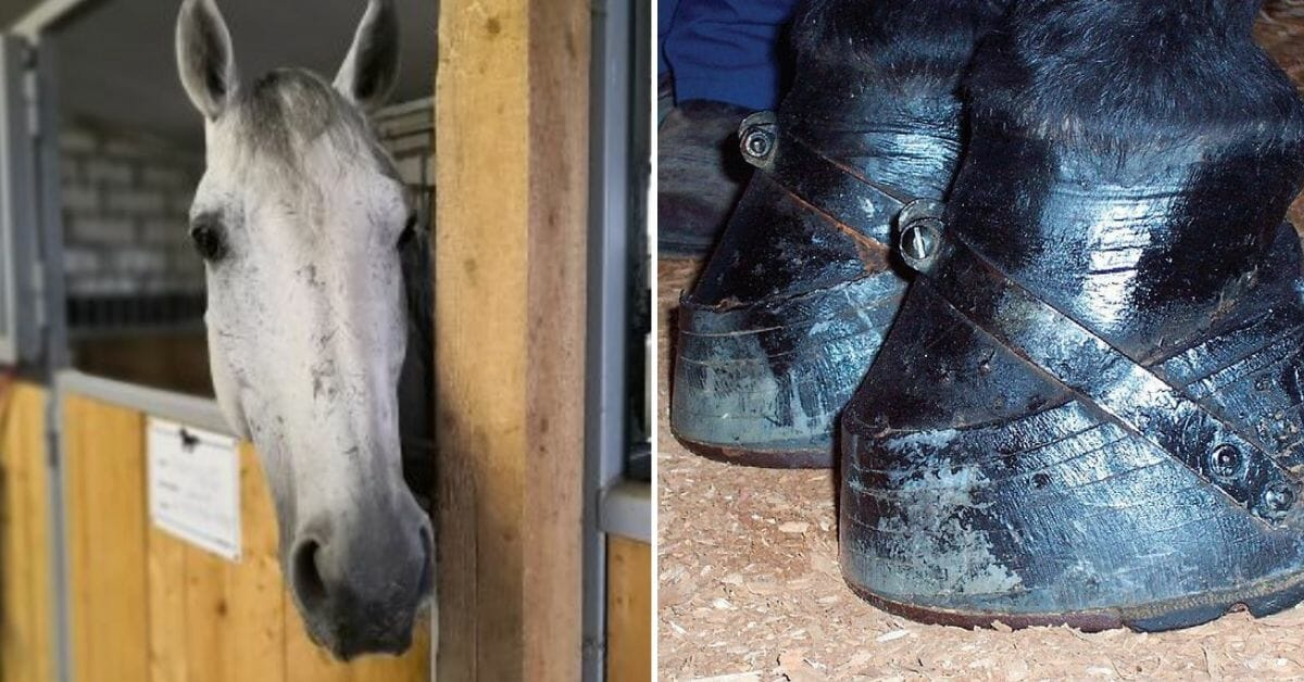 Victory for Equines: House Votes to Ban Cruel Horse Soring