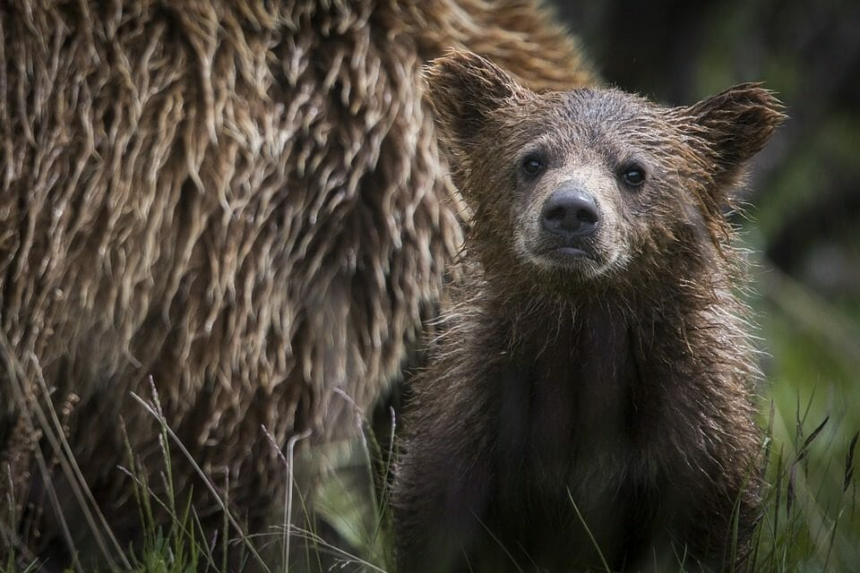 The U.S. Government Has Just Gutted the Endangered Species Act – Two States Plan to Sue