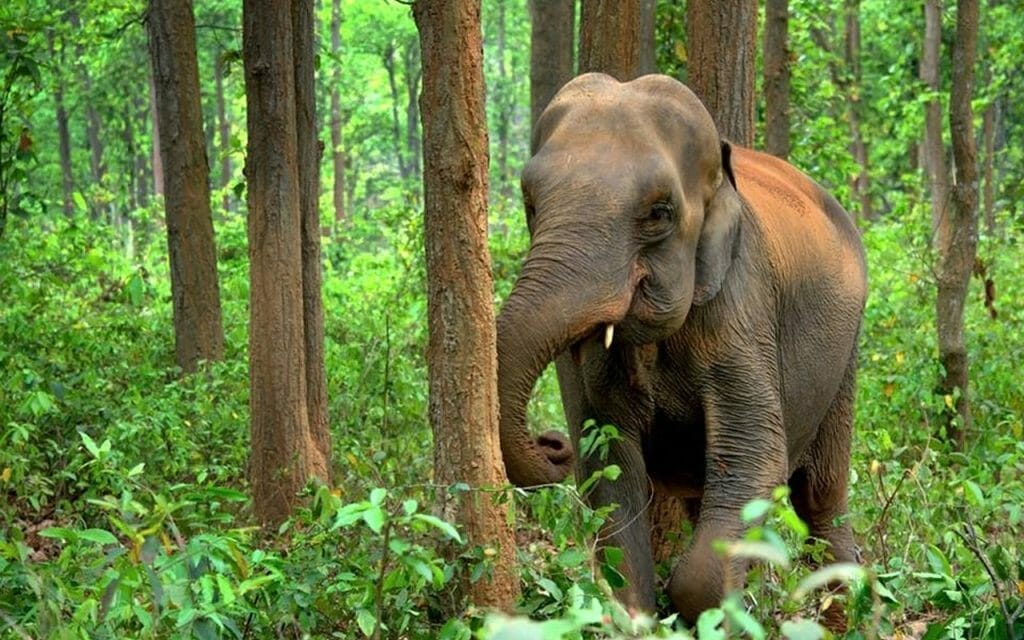 These Indian Villagers Are Donating Community Cropland to Feed Wild Elephants