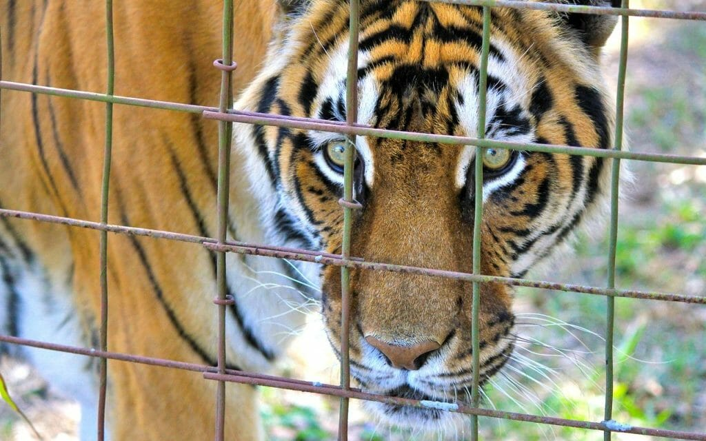 More Than 100 Animals Seized from Cruel Virginia Roadside Zoo