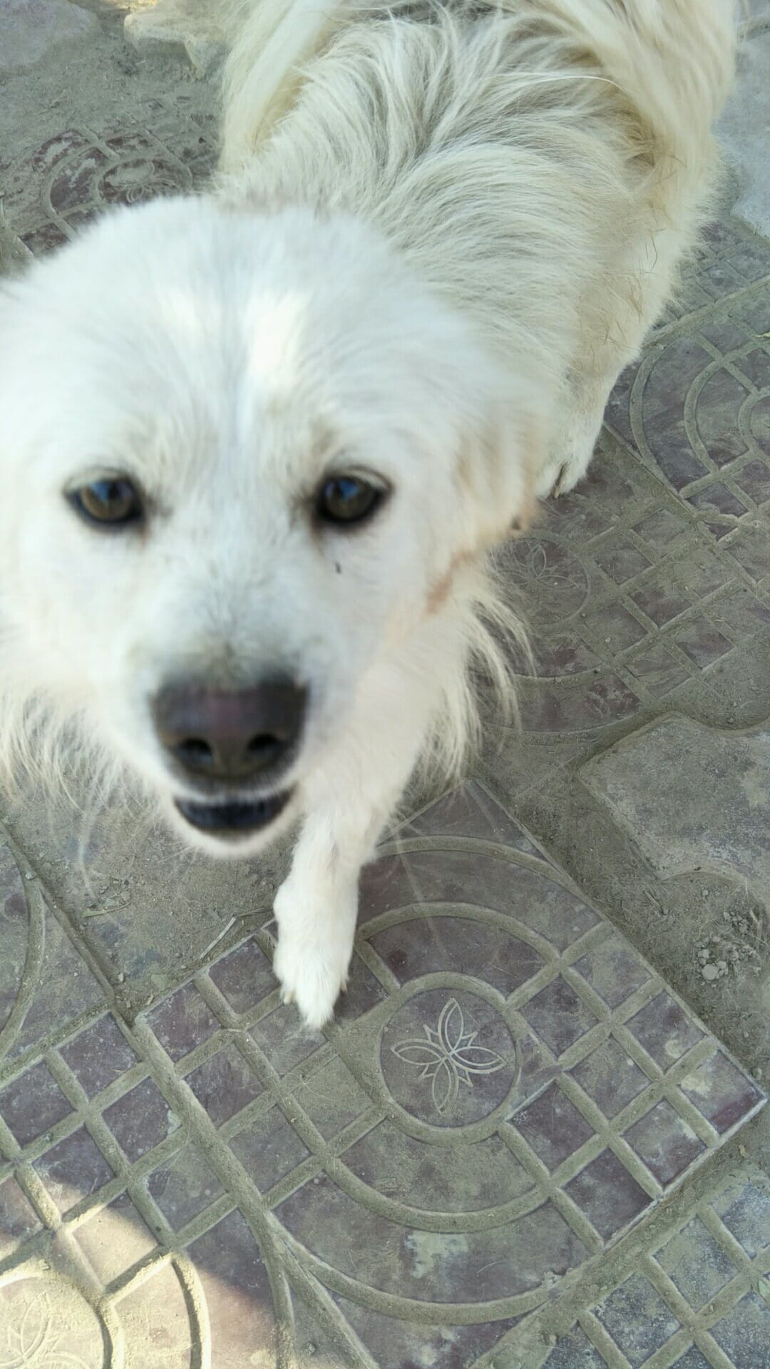 Yellow Hair, one of the many dogs that animal heroes like you have helped us at Lady Freethinker to rescue. Thank you!