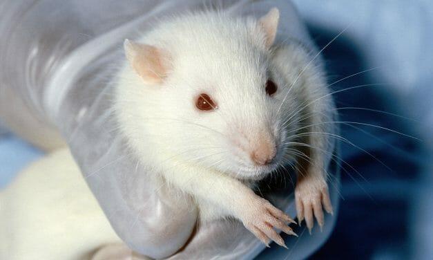 Victory! EPA Moves To Eliminate Cruel Animal Testing