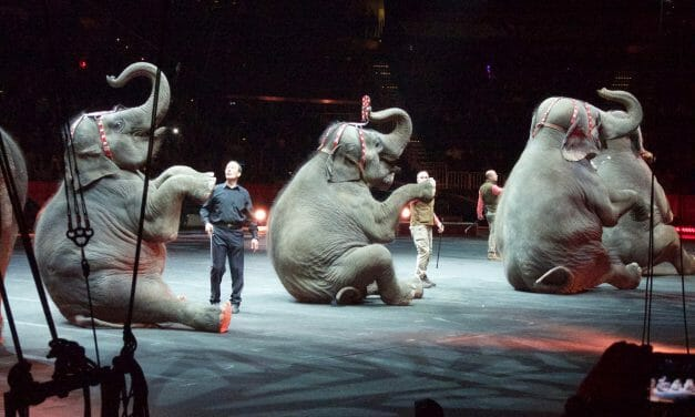 Victory for Elephants! California Moves to Ban Wild Animals in the Circus