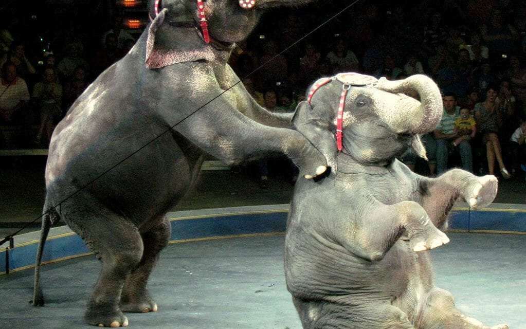 Rescued! Denmark Saves Country's Last 4 Circus Elephants to Give Them A Happy Retirement