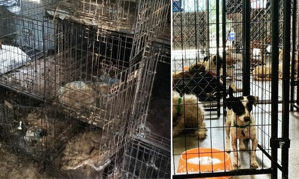 SIGN: Justice for Hundreds of Dead and Dying Dogs Neglected by Fraudulent 'Rescue'