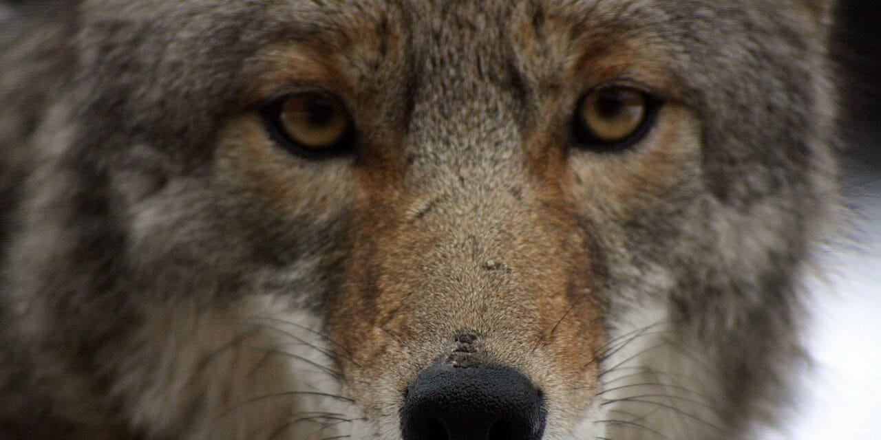 Arizona Has Just Banned Cruel and Barbaric Wildlife Killing Contests
