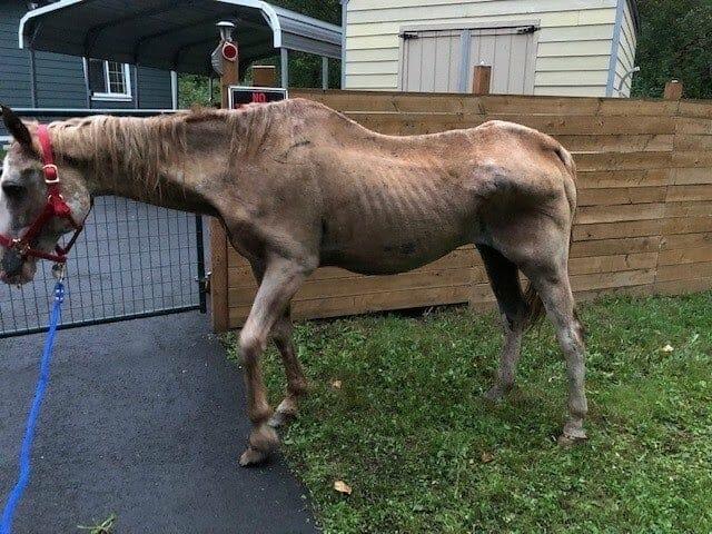 SIGN: Justice for Horse Starved to Skeletal Frame