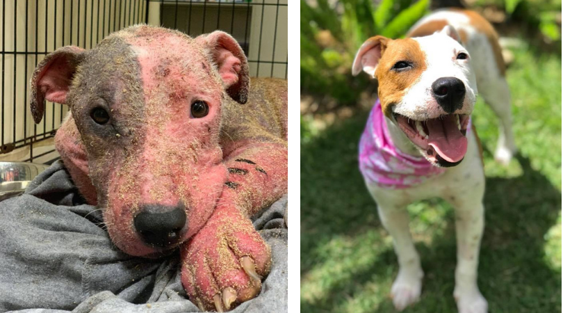 UPDATE: Dog Stabbed and Buried Alive Makes Stunning Recovery