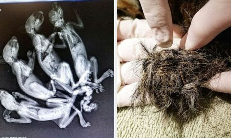 SIGN: Justice for Baby Squirrels Tied Together By the Tail and Left on Train Tracks